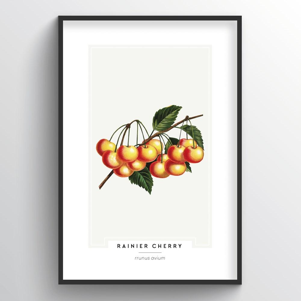 Cherries Botanical Art Print - Point Two Design