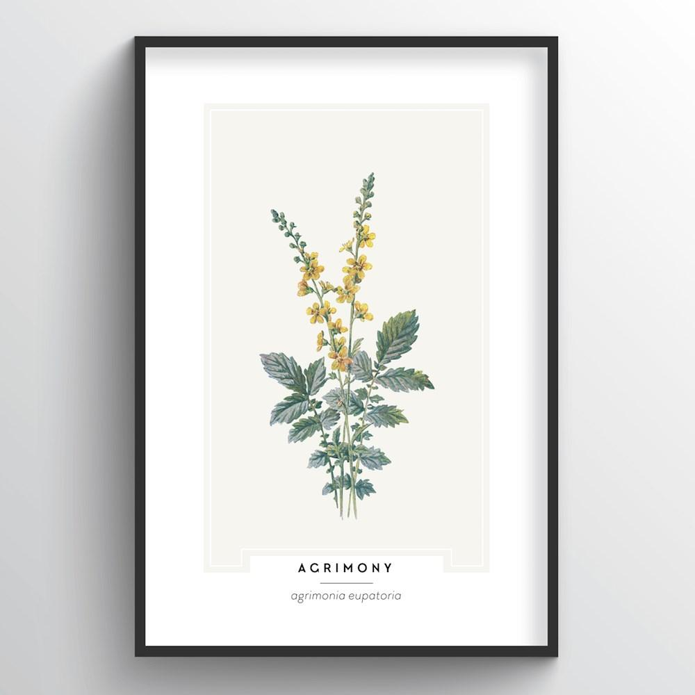 Agrimony Botanical Art Print - Point Two Design