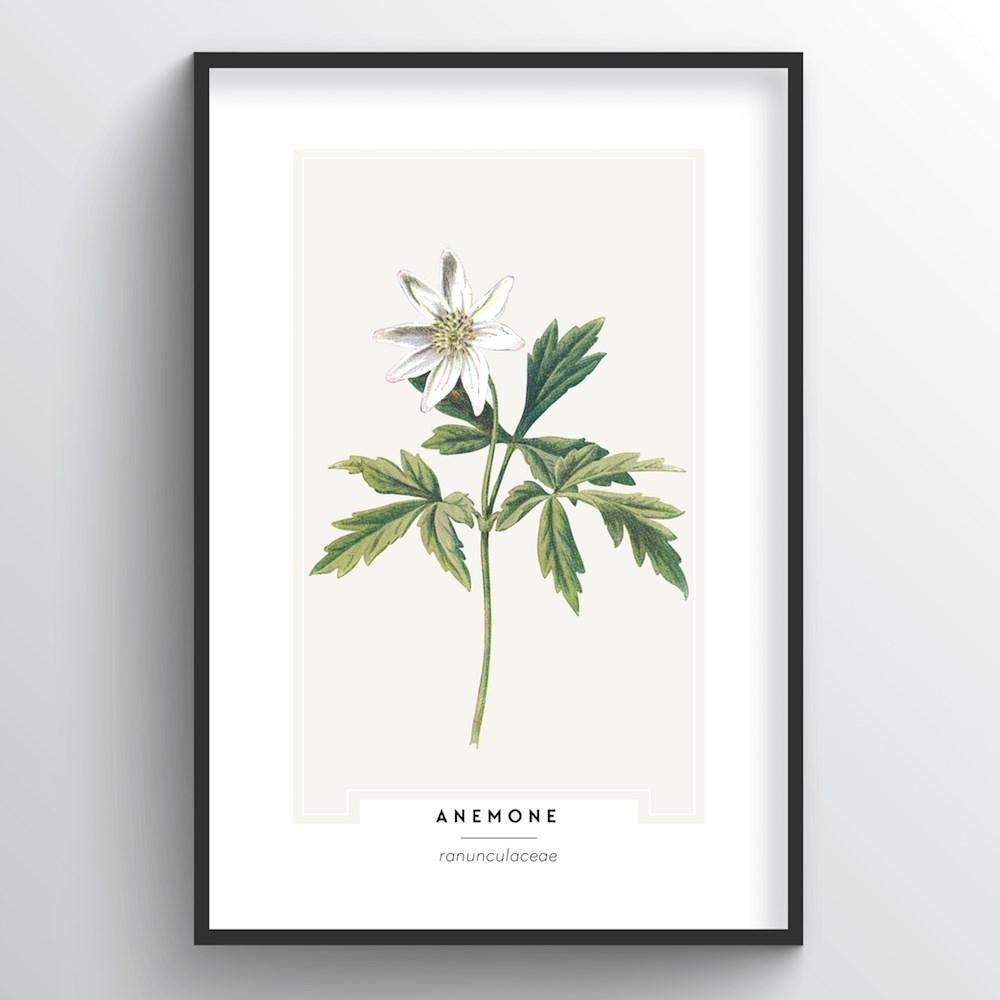 Anemone Botanical Art Print - Point Two Design