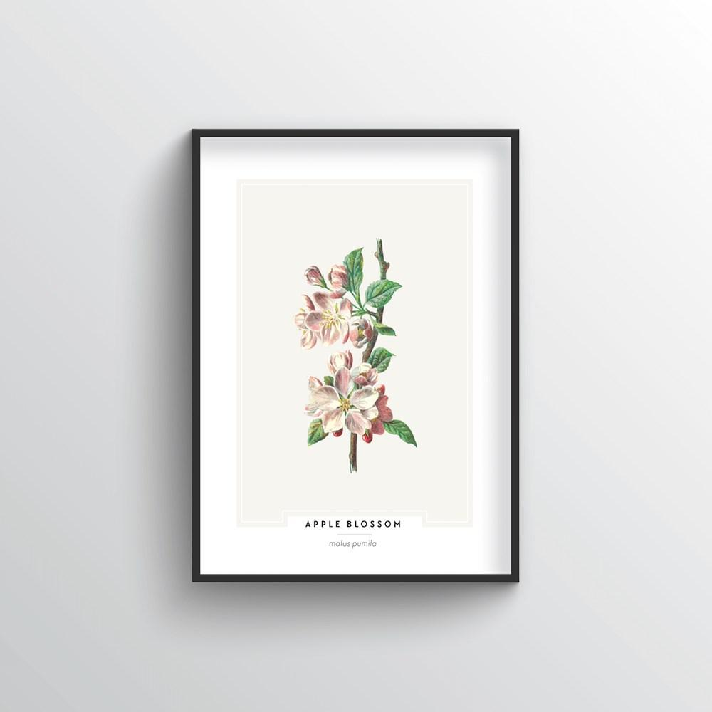 Apple Blossom Botanical Art Print - Point Two Design
