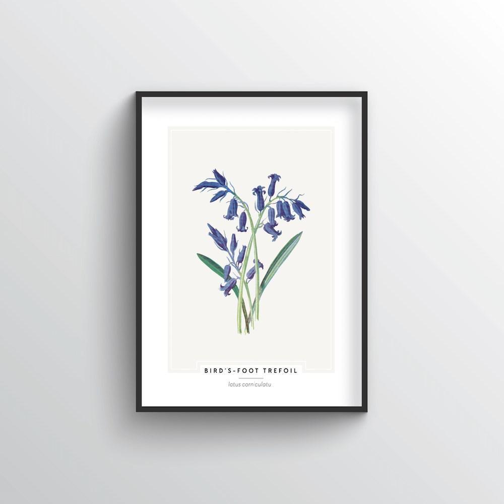 Birds Foot Trefoil Botanical Art Print - Point Two Design
