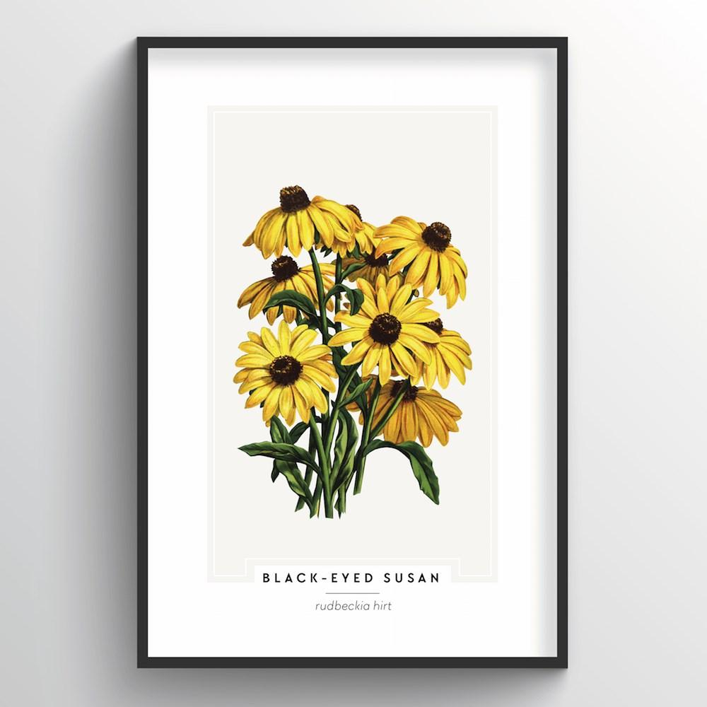 Black Eyed Susan Botanical Art Print - Point Two Design
