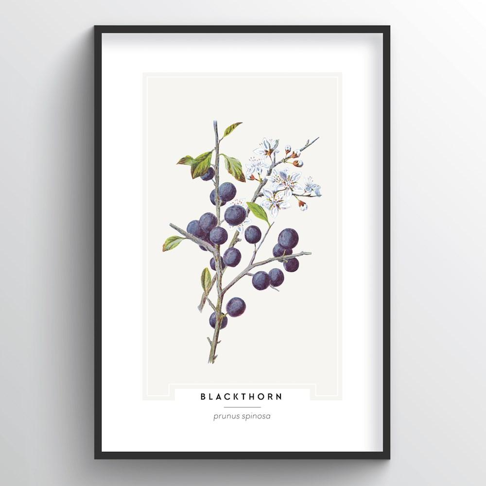 Blackthorn Botanical Art Print - Point Two Design