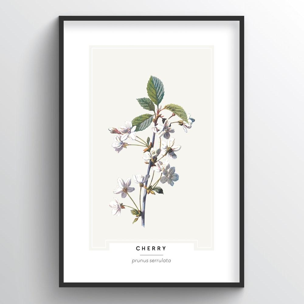 Cherry Blossom Botanical Art Print - Point Two Design