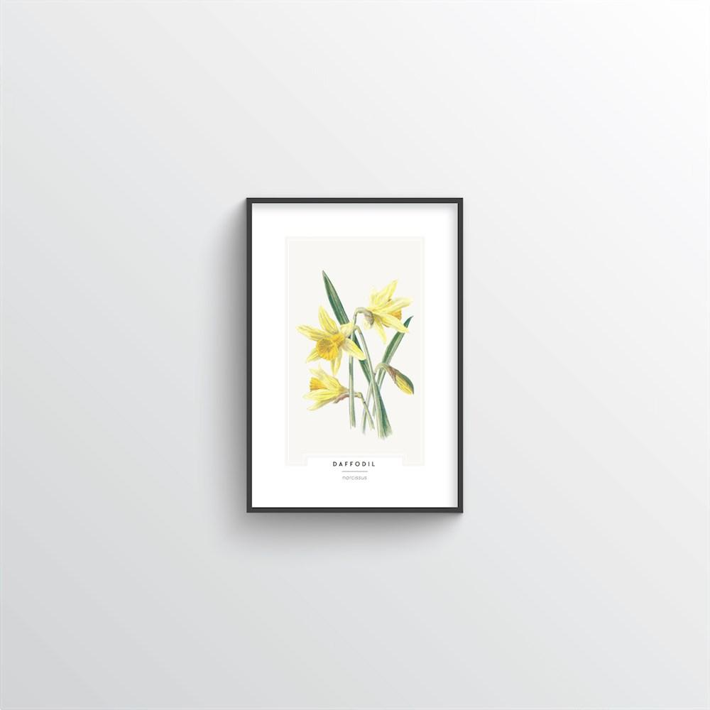 Daffodil Botanical Art Print - Point Two Design