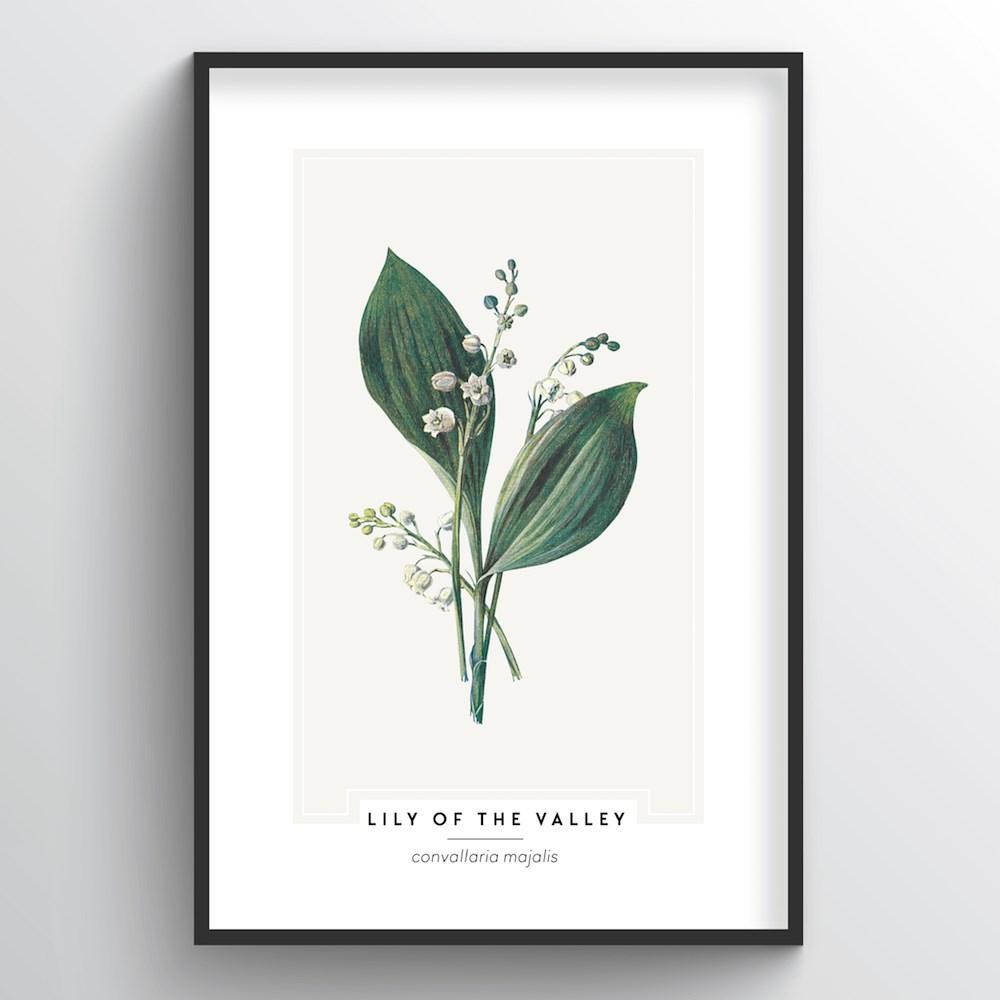 Lily Of The Valley Botanical Art Print