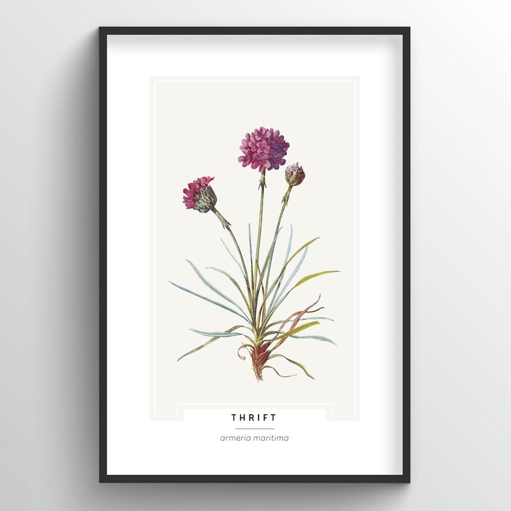 Thrift Botanical Art Print