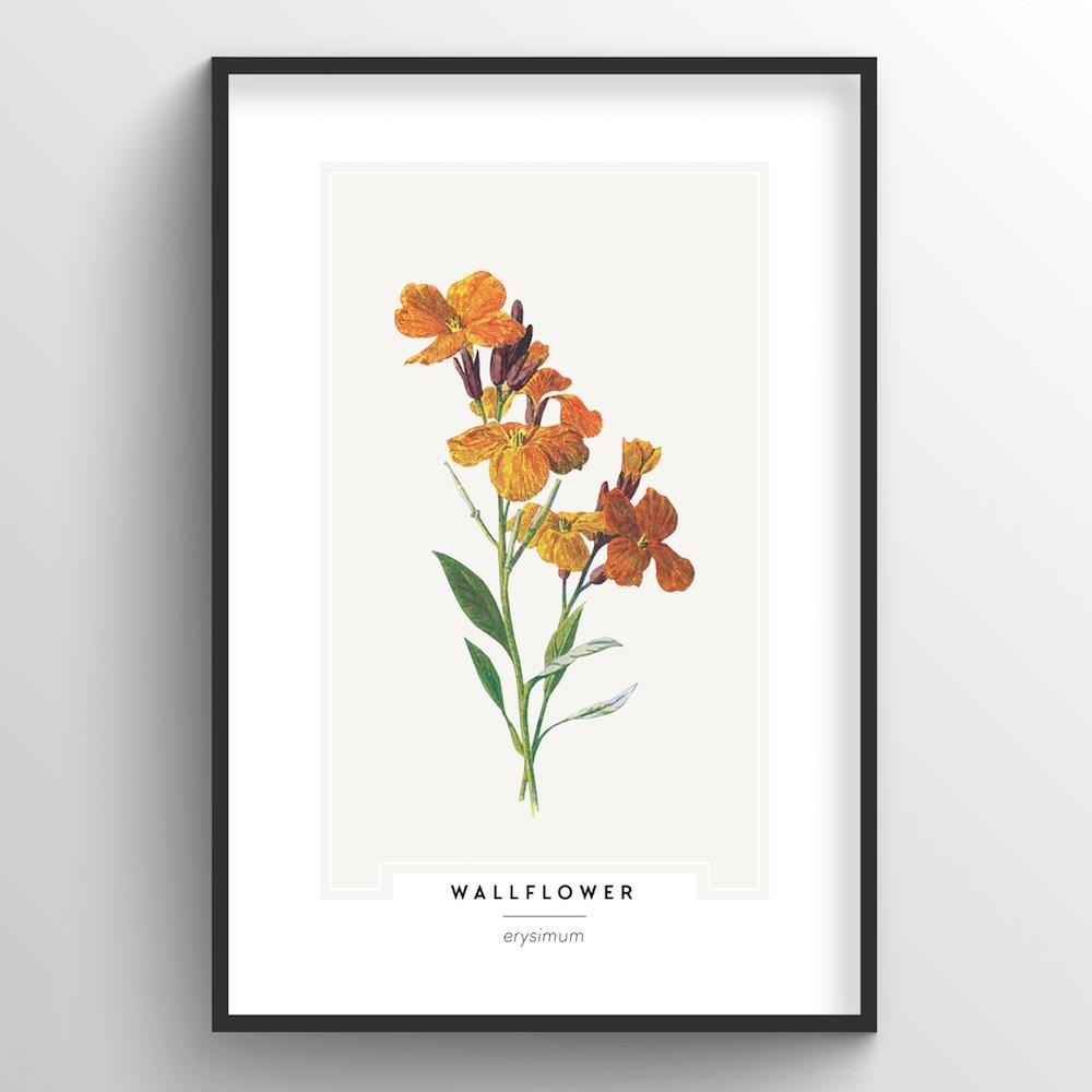 Wallflower Botanical Art Print