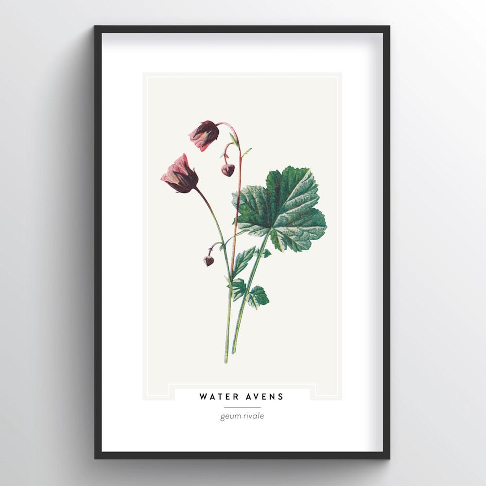 Water Avens Botanical Art Print