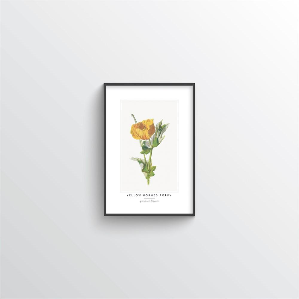 Yellow Horned Poppy Botanical Art Print