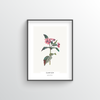 Champion Botanical Art Print - Point Two Design