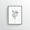 Hyacinth Botanical Art Print