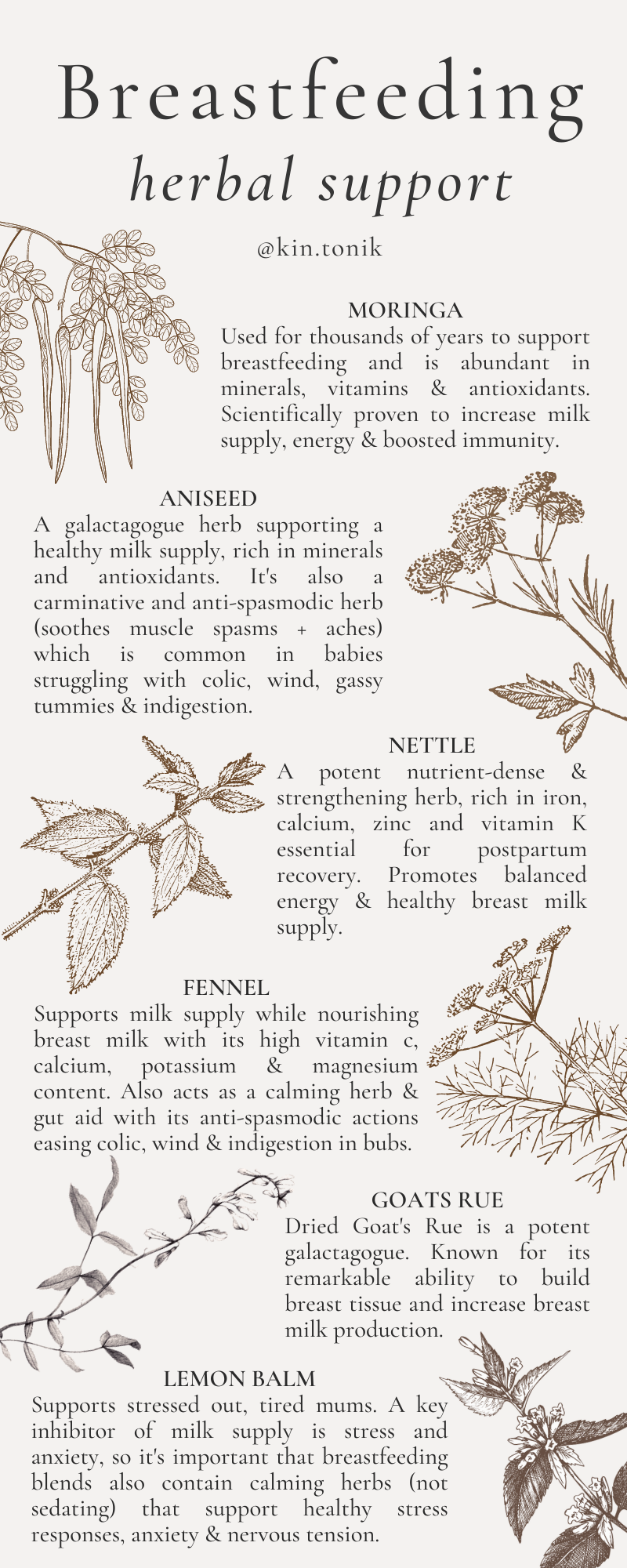 breastfeeding herbal support infograph