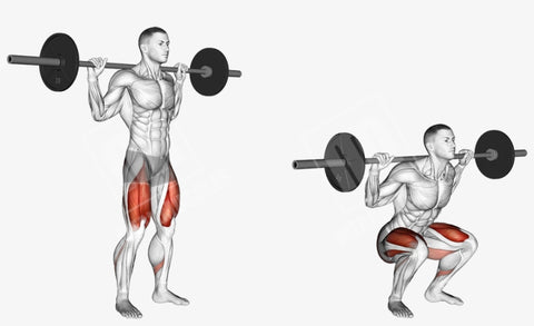 BARBELL AND DUMBBELL SQUATS