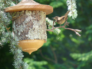 Carolina wren using one of our early birdhouses
