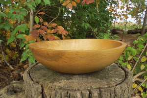 Large Hackberry Usable Bowl