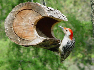 hanging bird feeder, red bellied woodpecker on log feeder