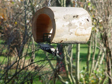 bird on suet feeder