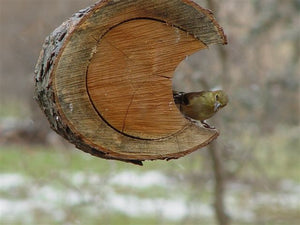 bird in log bird feeder