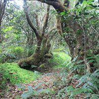 Collection of VIDEOS about El Yunque rainforest