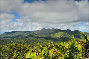 Common question - What is El Yunque Rainforest?