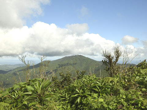 el yunque rain forest puerto rico hiking vacation forest nature