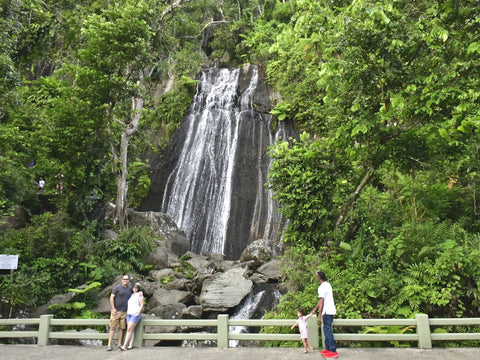 el yunque rain forest puerto rico forest nature vacation hiking caribbean eynf