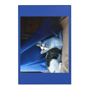 Area Rugs - The baby cat Dante dazzle by the window and curtains - Isabela PR - Yunque Store