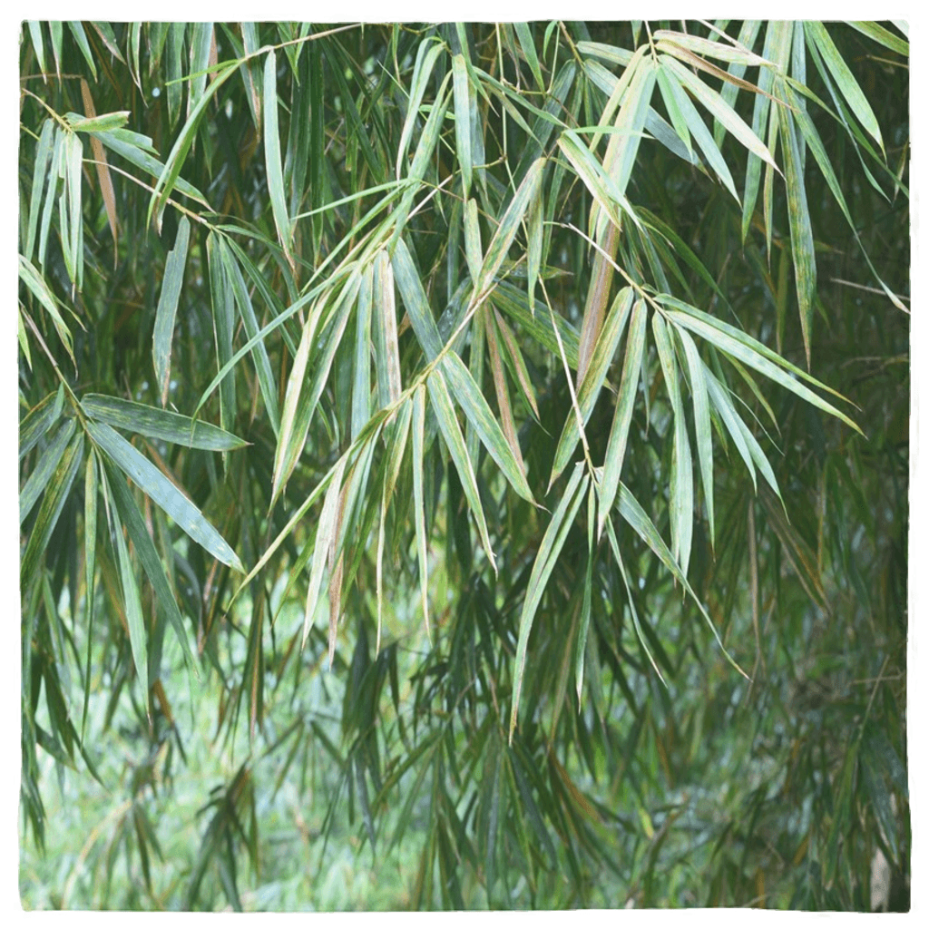 Bandanas - Bamboo leaves AwsomeRainForest@Home