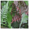 Bandanas - Fern plants AwsomeRainForest@Home