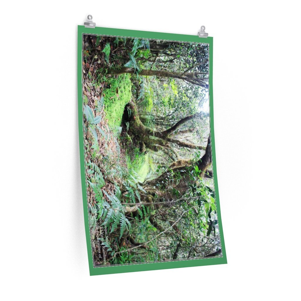BEST DEALS - top quality Posters - Deep forest exploration - Rio Espiritu Santo - El Yunque PR - Yunque Store