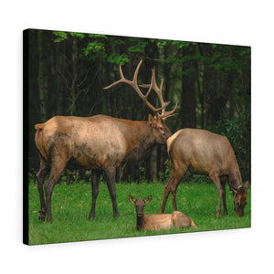 Canvas Gallery Wraps - A lovely Deer family in Smoky Mountain National Park in Summer in Mountain National Park (SMNP) USA - Yunque Store