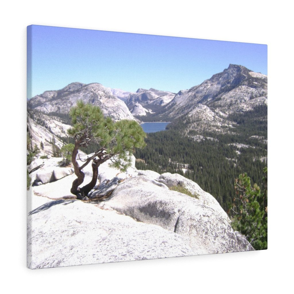Canvas Gallery Wraps - The US National Parks - Yosemite Park peaks next to Tuolmne Meadows - California - USA NPS - Yunque Store