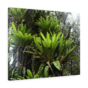 Canvas Gallery Wraps - US Made - CG Pro Prints in 2 days - Rio Sabana - El Yunque exploration on Sep 2019 - After Marias destruction Bromeliads are coming back strong! Canvas Printify
