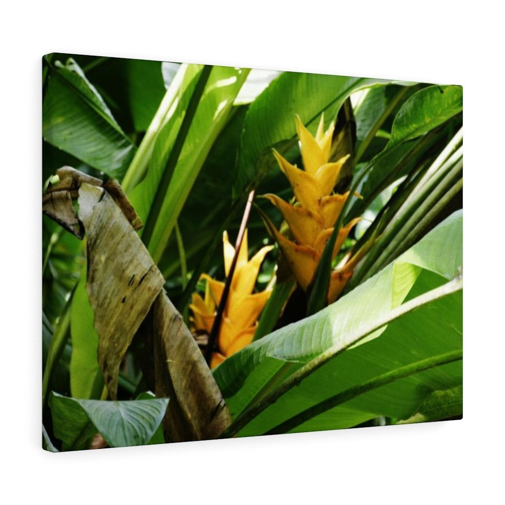 Canvas Gallery Wraps - US Made - CG Pro Prints in 2 days - Rio Sabana - El Yunque exploration on Sep 2019 - Heliconia flowers on PR 191 - Yunque Store