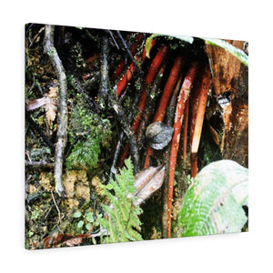 Canvas Gallery Wraps - US Made - CG Pro Prints in 2 days - Rio Sabana - El Yunque exploration on Sep 2019 - New orange roots of the Sierra Palm - able to wisthand hurricane force winds! Canvas Printify