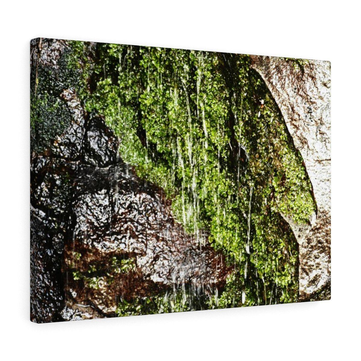 Canvas Gallery Wraps - US Made - CG Pro Prints in 2 days - Rio Sabana - El Yunque exploration on Sep 2019 - on the road PR 191 during the rains - water drips from all sides Canvas Printify