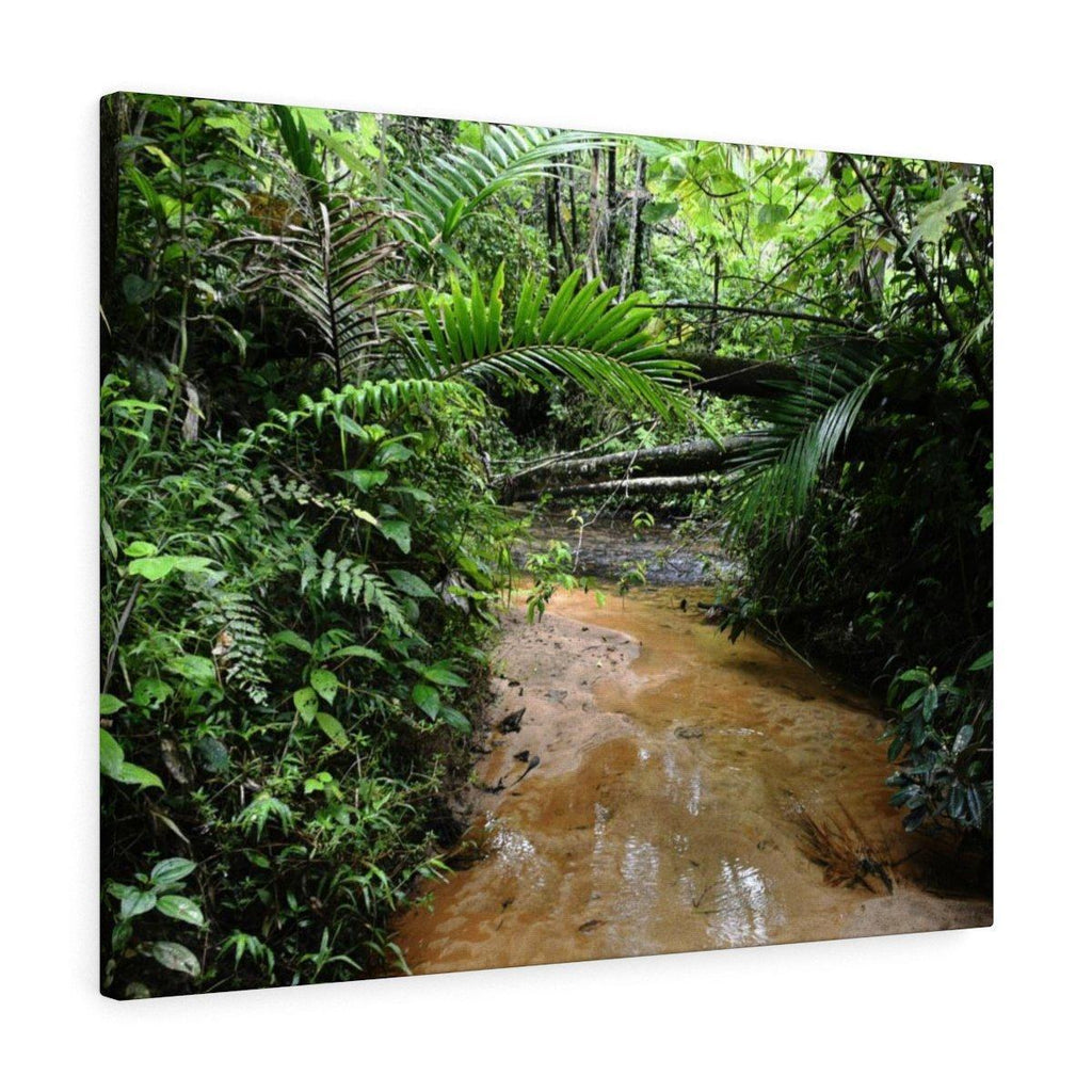 Canvas Gallery Wraps - US Made - CG Pro Prints in 2 days - Rio Sabana - El Yunque exploration on Sep 2019 - Rio Sabana after 1st trail crossing - a tributary Canvas Printify
