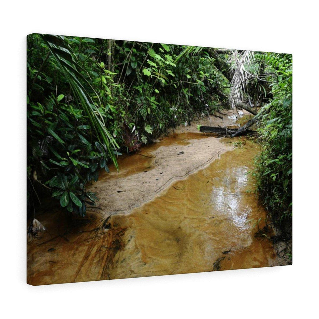 Canvas Gallery Wraps - US Made - CG Pro Prints in 2 days - Rio Sabana - El Yunque exploration on Sep 2019 - Rio Sabana after 1st trail crossing Canvas Printify