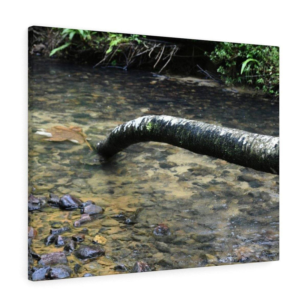 Canvas Gallery Wraps - US Made - CG Pro Prints in 2 days - Rio Sabana - El Yunque exploration on Sep 2019 - Rio Sabana after 1st trail crossing - dead Palm trunk in the sand Canvas Printify
