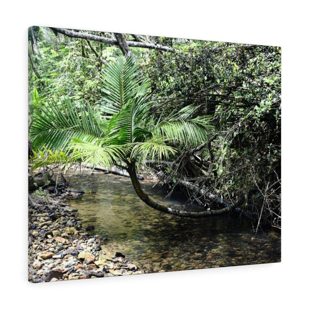 Canvas Gallery Wraps - US Made - CG Pro Prints in 2 days - Rio Sabana - El Yunque exploration on Sep 2019 - Rio Sabana after 1st trail crossing - Fallen but surviving Sierra Palm Canvas Printify