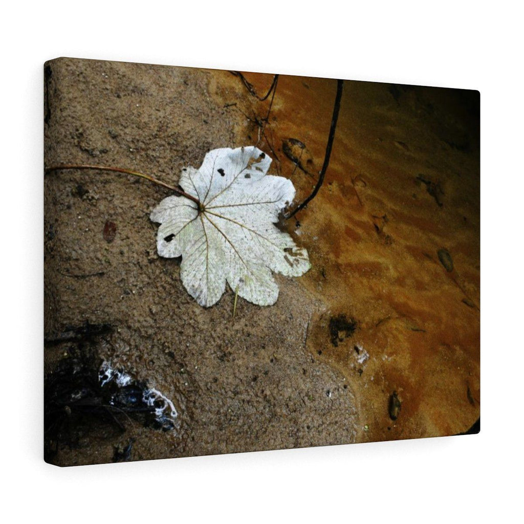 Canvas Gallery Wraps - US Made - CG Pro Prints in 2 days - Rio Sabana - El Yunque exploration on Sep 2019 - Rio Sabana after 1st trail crossing - Yagrumo leaf on river due to storms Canvas Printify
