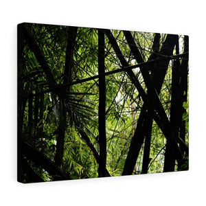 Canvas Gallery Wraps - US Made - CG Pro Prints in 2 days - Rio Sabana - El Yunque exploration on Sep 2019 - Scarmbled bamboos due to the storm Dorian Canvas Printify