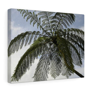 Canvas Gallery Wraps - US Made - CG Pro Prints in 2 days - Rio Sabana - El Yunque exploration on Sep 2019 - The ancient Fern Palm - once the only tree on Earth! Canvas Printify