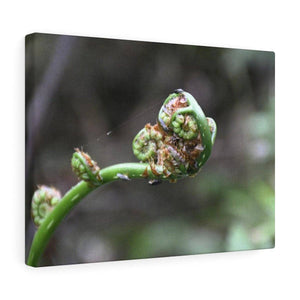 Canvas Gallery Wraps - US Made - CG Pro Prints in 2 days - Rio Sabana - El Yunque exploration on Sep 2019 - The fern plant young leaf sprout Canvas Printify