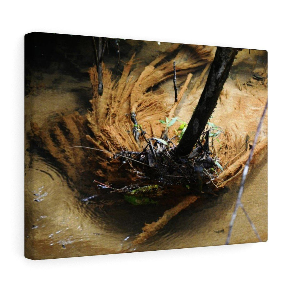 Canvas Gallery Wraps - US Made - CG Pro Prints in 2 days - Rio Sabana - El Yunque exploration on Sep 2019 - trunk holds the stream debris Canvas Printify