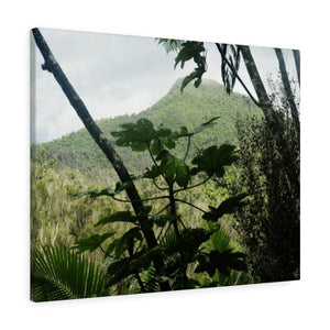Canvas Gallery Wraps - US Made - CG Pro Prints in 2 days - Rio Sabana - El Yunque exploration on Sep 2019 - View of peaks from the trail - Yagrumos on front Canvas Printify