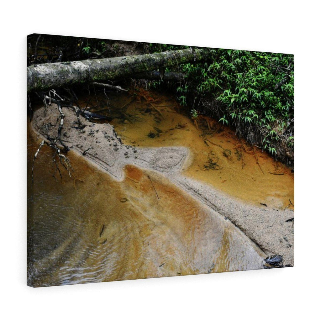 Canvas Gallery Wraps - US Made - CG Pro Prints in 2 days - Rio Sabana - El Yunque exploration on Sep 2019 - Young Yagrumo leaf - Tributary joins the river Canvas Printify