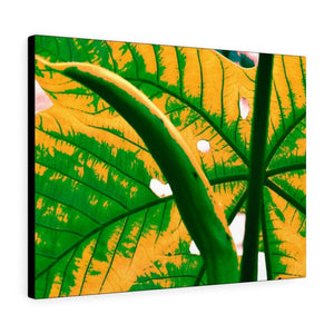 Canvas Gallery Wraps - USA MADE 👨‍👩‍👧‍👧 Unique images of Yagrumo Tree & leafs from El Yunque rainforest PR - Alien 👽 Vision - Yunque Store