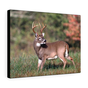 Canvas Gallery Wraps - Whitetail deer buck in Smoky Mountain National Park (SMNP) USA - Yunque Store